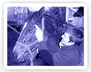 A horse being treated with Equine Bowen Therapy