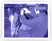 Equine Bowen Therapy having a calming effect